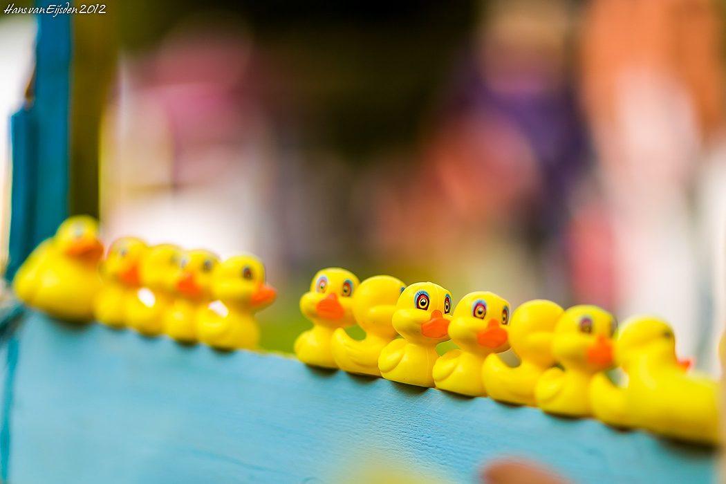 Little Ducks (HvE-20120907-0036)