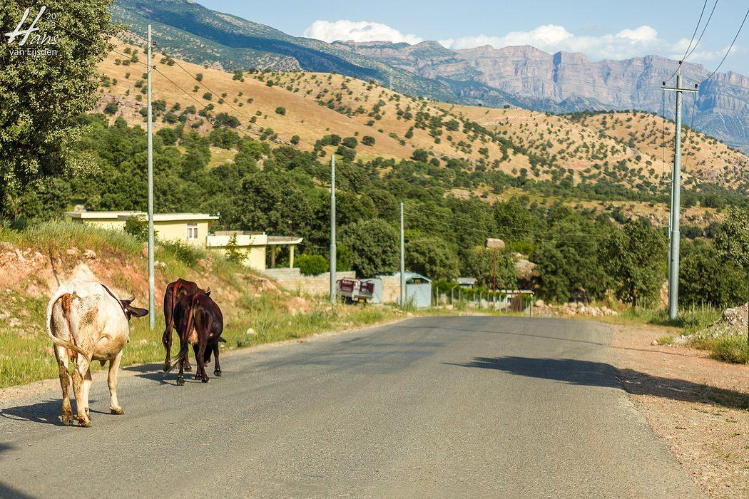 Iraqi Kurdistan (HvE-20130518-1182)