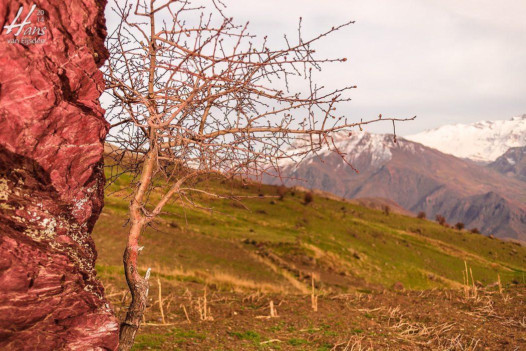 Halgort Mountains (HvE-20140402-8427)